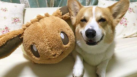 Corgi Lovingly Befriends Pokemon Stuffed Animal