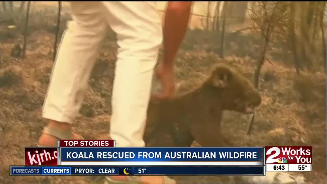 Koala rescued from Australian wildfire