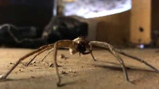 Ever see a spider eating breakfast?
