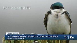 Studying birds and bats using weather radar