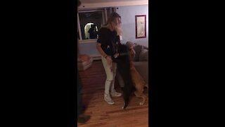 Woman surprises her dogs after 2 months away