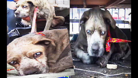 This blind dog has been neglected his entire life 🥺️