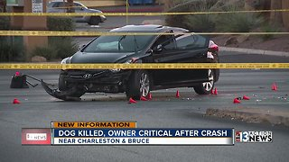 Dog killed, owner in critical condition after crash