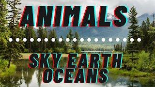 Animals Sky Earth Oceans