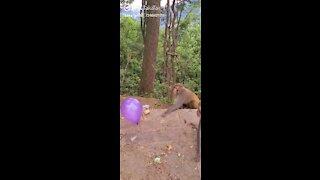 Monkey 🐒🐒🐒 Play on basketball funny game