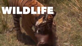Wildlife Crazy