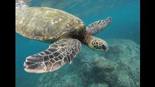 Tourist flees turtle sea attack