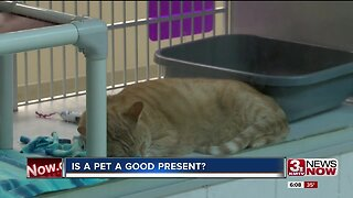 Courtney's Corner: Is a pet a good present?
