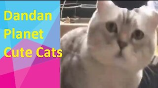 Dandan Planet - cute cats for you