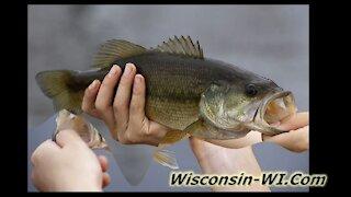 Wisconsin Largemouth Bass Taste Underwater Camera VIDEO - Landman Realty LLC