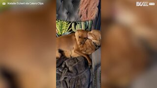 Cat and dog hug each other like family
