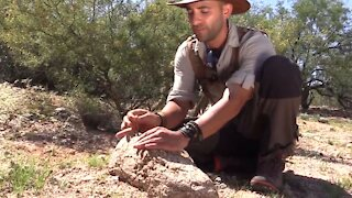 How to Survive a Scorpion Sting