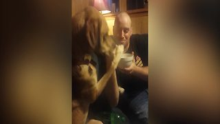 Funny Dog Wants Some Ice Cream