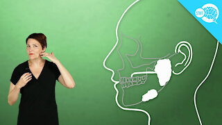 How Does Saliva Work?