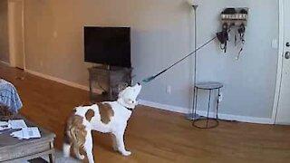 Dog knocks down wall hanging holder