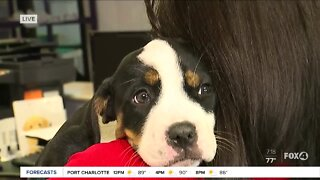 Pet of the Week: Millie at GCHS