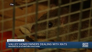 Valley homeowners dealing with rats