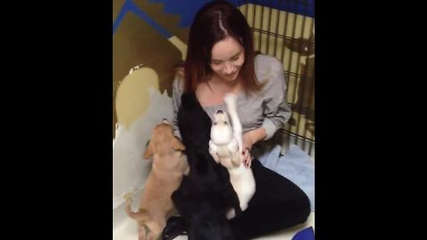 Puppy Reunites With Siblings Four Years After Adoption