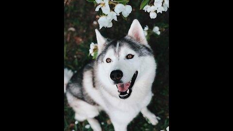 Dog is very good