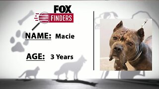 FOX Finders Pet Finder - Macie