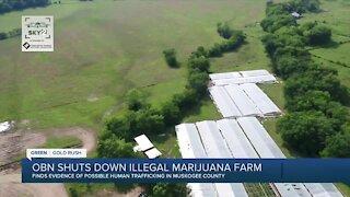 OBN shuts down illegal marijuana farm