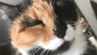 Cat loves nose massage