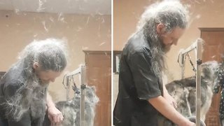 Funny Video Captures Moment Dog Grooming Causes Fur To Fly Everywhere