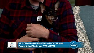 Denver Animal Protection