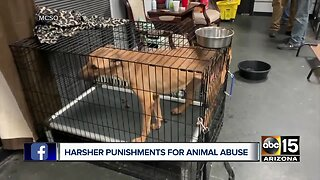 Governor Ducey signs new animal abuse bill into law