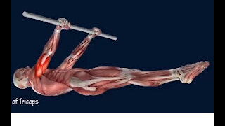 How to Front Lever Muscle Anatomy Training Program EasyFlexiiblity