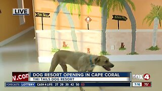 Tiki Tails Dog Resort opening in Cape Coral