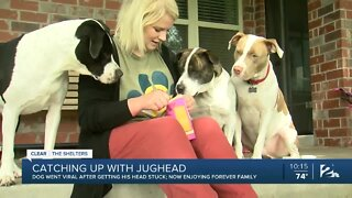 Catching up with Jughead the dog
