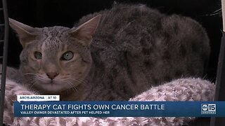 Therapy cat fights own cancer battle