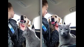Cute Funny Cats Life with Owners and Owners Cats are best Friends
