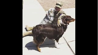 Dogs enthusiastically welcome soldier home from deployment