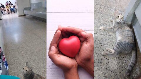 Gato fofo chega em UPA para dar amor a paciente com COVID-19