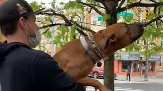 Dog loves to play with tree branches