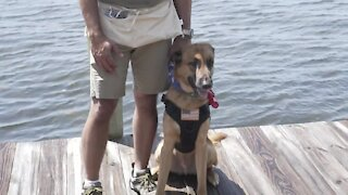 New service dog training center opening in Palm City