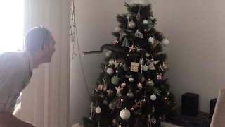 That's not tinsel! Shocked family find snappy snake hiding in Christmas tree