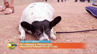 Pet Talk Tuesday – Pet disease and prevention
