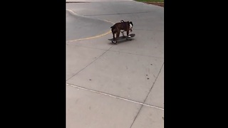 Skateboarding Dog Shows Off Her Impressive Skills