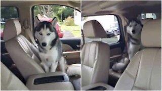 Cane si rifiuta di uscire dalla macchina della padrona
