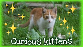 Curious kittens and cute!