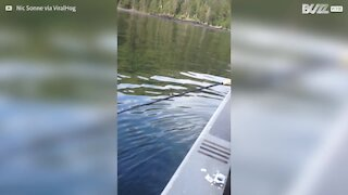 Balena emerge vicino ai pescatori