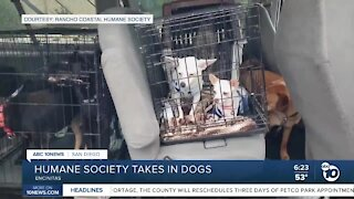 Humane Society takes in dogs