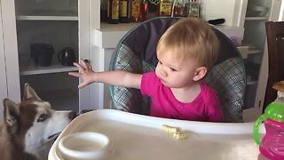 Compassionate baby shares food with Siberian husky