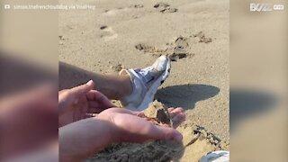 Ce chien creuse sur la plage, à la recherche de sa balle de sable