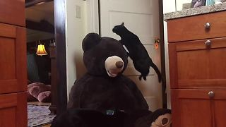 Jumping kitty in slow motion leaps over stuffed animal