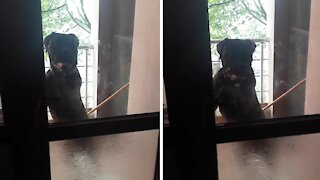 Impatient pup hilariously rings doorbell to come inside