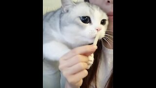 Hungry kitty is very curious as to what her owner is eating